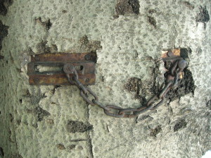 A lock growing out of a tree?